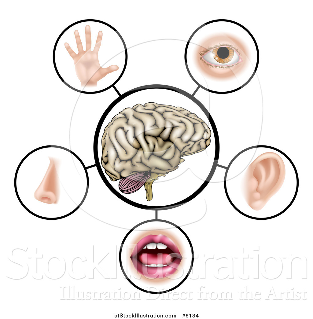 Vector Illustration Of A Brain With The Five Senses Around