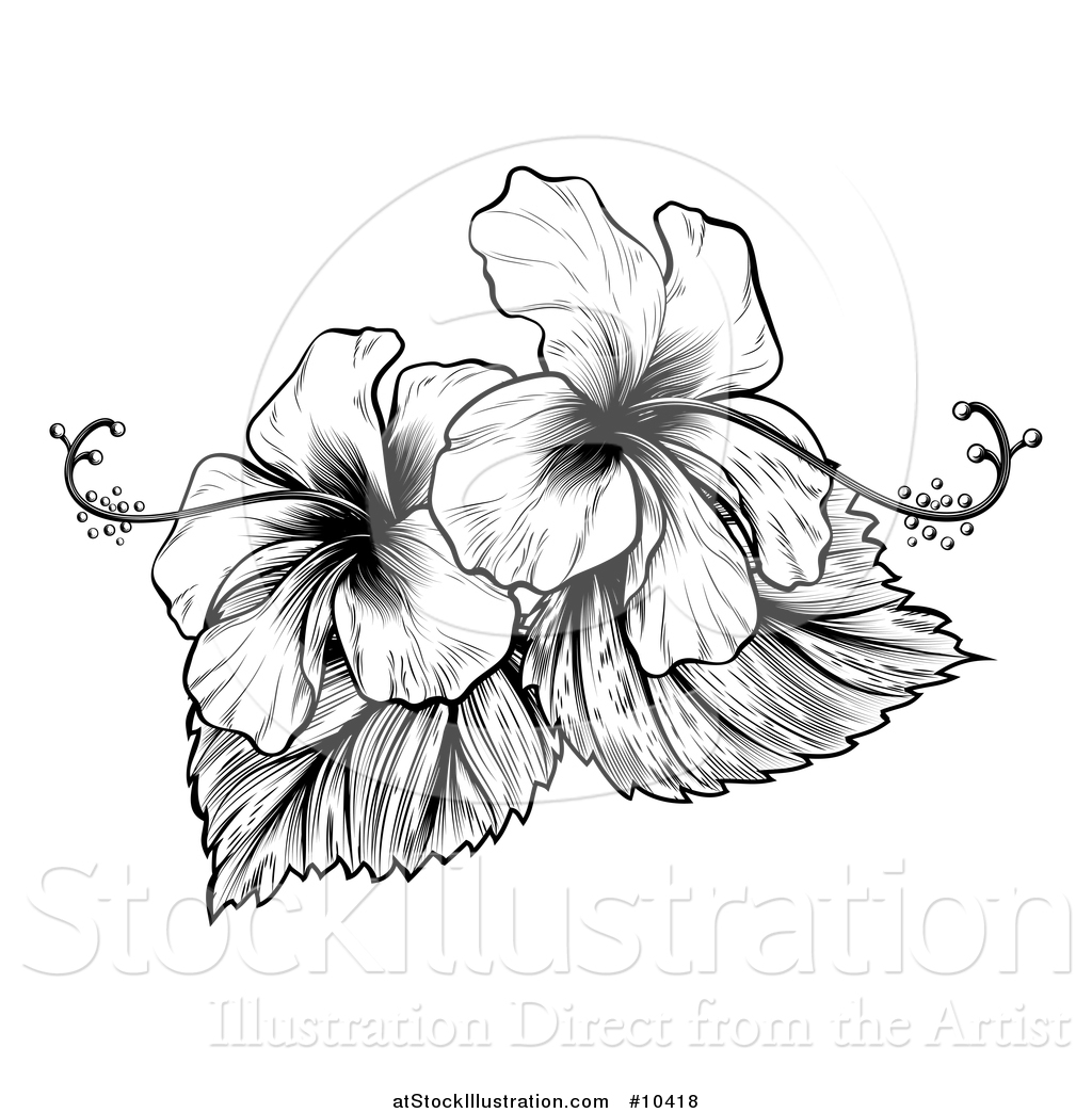 Hibiscus flower clipart image hibiscus flower - Vector Illustration Of A Vintage Black And White Engraved Or Woodcut Hibiscus Flower Design