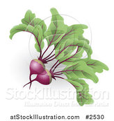 Vector Illustration of 3d Beetroot Beets by AtStockIllustration