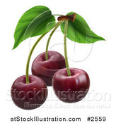Vector Illustration of 3d Dark Red Cherries with Stems by AtStockIllustration