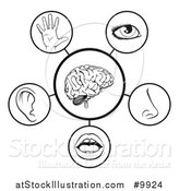 Vector Illustration of 5 Human Senses - Black and White Diagram by AtStockIllustration