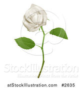 Vector Illustration of a 3d Goregous White Long Stemmed Rose by AtStockIllustration