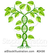 Vector Illustration of a 3d Green DNA Crop Gene Modification Helix Plant by AtStockIllustration