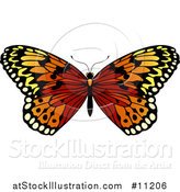 Vector Illustration of a Beautiful Butterfly by AtStockIllustration