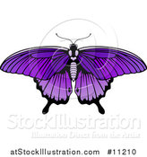 Vector Illustration of a Beautiful Purple Butterfly or Moth by AtStockIllustration