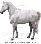 Vector Illustration of a Beautiful White Horse in Profile by AtStockIllustration
