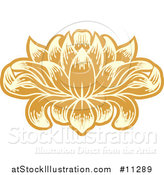 Vector Illustration of a Beautiful Yellow and Orange Water Lily Lotus Flower by AtStockIllustration