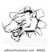 Vector Illustration of a Black and White Aggressive Boar Mascot Breaking Through a Wall by AtStockIllustration
