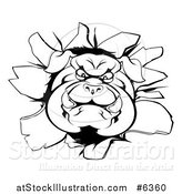 Vector Illustration of a Black and White Aggressive Bulldog Breaking Through a Wall by AtStockIllustration