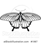 Vector Illustration of a Black and White Butterfly by AtStockIllustration
