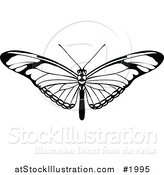 Vector Illustration of a Black and White Butterfly or Moth by AtStockIllustration