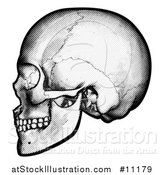 Vector Illustration of a Black and White Engraved Human Skull in Profile by AtStockIllustration