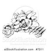 Vector Illustration of a Black and White Ferocious Wolf Slashing and Breaking Through a Wall 3 by AtStockIllustration