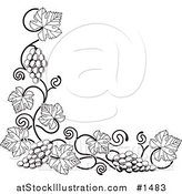 Vector Illustration of a Black and White Grape Vine with Bunches of Grapes and Leaves Curling Along a Bottom Left Corner Edge by AtStockIllustration