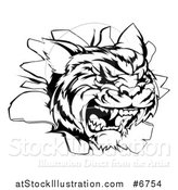Vector Illustration of a Black and White Mad Tiger Mascot Head Breaking Through a Wall by AtStockIllustration