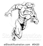 Vector Illustration of a Black and White Muscular Bulldog Mascot Running Upright by AtStockIllustration