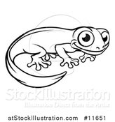 Vector Illustration of a Black and White Newt or Salamander by AtStockIllustration
