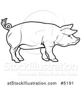 Vector Illustration of a Black and White Pig in Profile by AtStockIllustration