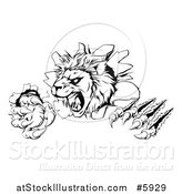 Vector Illustration of a Black and White Roaring Lion Mascot Head Shredding Through a Wall by AtStockIllustration