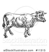Vector Illustration of a Black and White Sketched Cow in Profile by AtStockIllustration