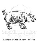 Vector Illustration of a Black and White Sketched Pig in Profile by AtStockIllustration