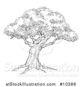 Vector Illustration of a Black and White Sketched Tree by AtStockIllustration