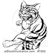 Vector Illustration of a Black and White Vicious Roaring Muscular Tiger Man Punching by AtStockIllustration
