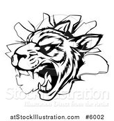 Vector Illustration of a Black and White Vicious Tiger Mascot Breaking Through a Wall by AtStockIllustration