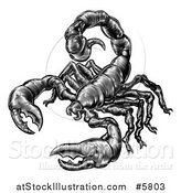 Vector Illustration of a Black and White Vintage Engraved Scorpion by AtStockIllustration