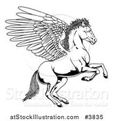 Vector Illustration of a Black and White Winged Pegasus Horse Rearing Outline by AtStockIllustration
