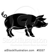 Vector Illustration of a Black Pig in Profile by AtStockIllustration
