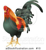 Vector Illustration of a Black, Red and Orange Cock, Chicken, Rooster Bird by AtStockIllustration