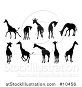 Vector Illustration of a Black Silhouetted Giraffes by AtStockIllustration