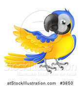 Vector Illustration of a Blue and Yellow Parrot Presenting by AtStockIllustration