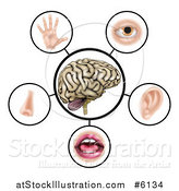Vector Illustration of a Brain with the Five Senses Around It by AtStockIllustration