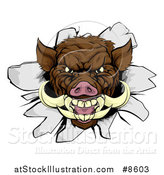 Vector Illustration of a Brown Boar Head Breaking Through a Wall by AtStockIllustration