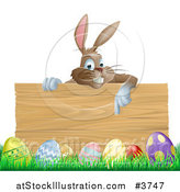 Vector Illustration of a Brown Easter Bunny Pointing down at a Wood Sign over Eggs in Grass by AtStockIllustration