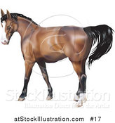 Vector Illustration of a Brown Horse with a Black Mane by AtStockIllustration