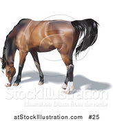 Vector Illustration of a Brown Horse with a Black Mane Grazing by AtStockIllustration