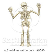 Vector Illustration of a Cartoon Human Skeleton Holding up Both Hands by AtStockIllustration