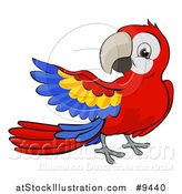 Vector Illustration of a Cartoon Scarlet Macaw Parrot Presenting by AtStockIllustration