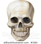Vector Illustration of a Creepy Human Skull with a Clenched Jaw by AtStockIllustration