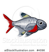 Vector Illustration of a Cute X-ray Tetra Freshwater Fish by AtStockIllustration