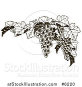Vector Illustration of a Dark Grapes and Leaves Border by AtStockIllustration