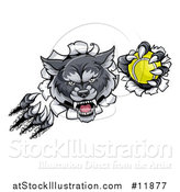 Vector Illustration of a Ferocious Gray Wolf Slashing Through a Wall with a Tennis Ball by AtStockIllustration