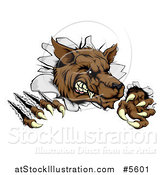 Vector Illustration of a Ferocious Wolf Scratching and Breaking Through a Wall by AtStockIllustration
