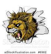 Vector Illustration of a Fierce Roaring Lion Mascot Head Breaking Through a Wall by AtStockIllustration