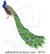 Vector Illustration of a Gorgeous Indian Blue Peacock Bird by AtStockIllustration