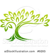 Vector Illustration of a Gradient Green Mature Tree with a Curving Trunk by AtStockIllustration