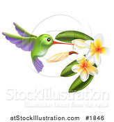 Vector Illustration of a Green and Purple Hummingbird with Plumeria Flowers by AtStockIllustration